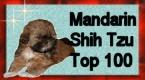 Mandarin shih-tzu TOP100